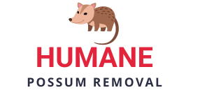Humane Possum Removal
